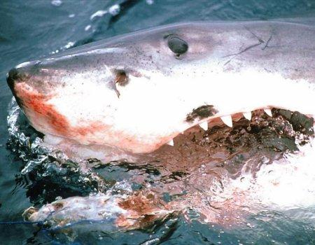 fondos-tiburones-p